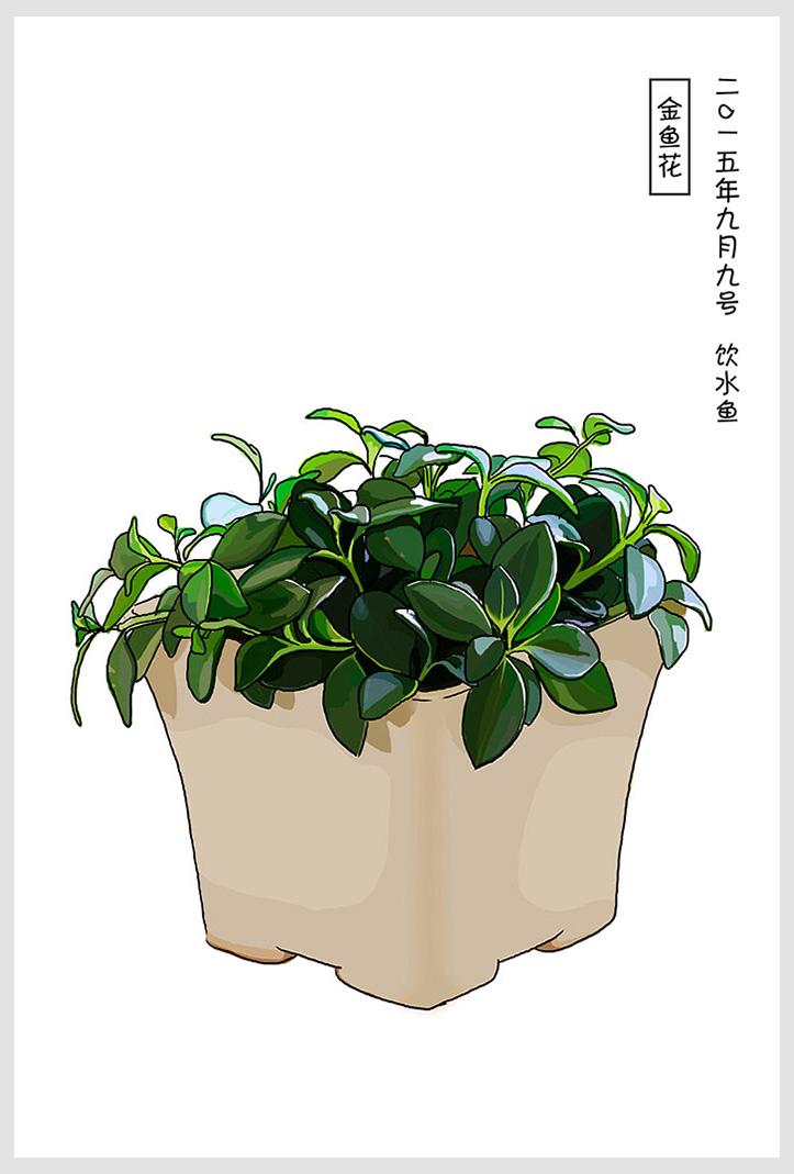 手绘常见室内小盆栽