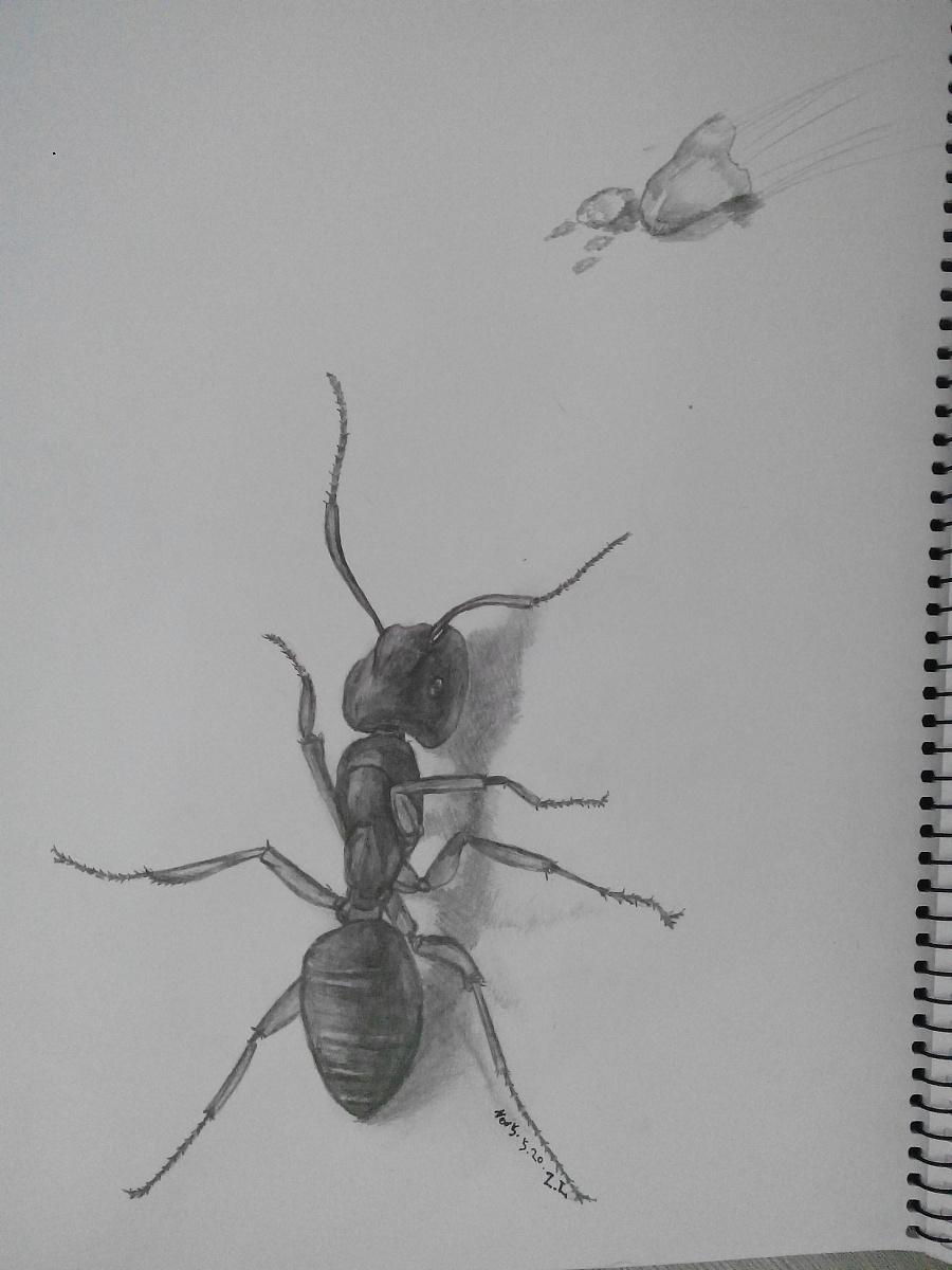 蚂蚁牙黑英文歌 图片合集图片