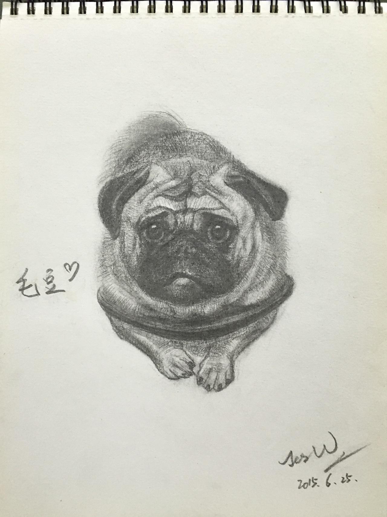 狗 铅笔画