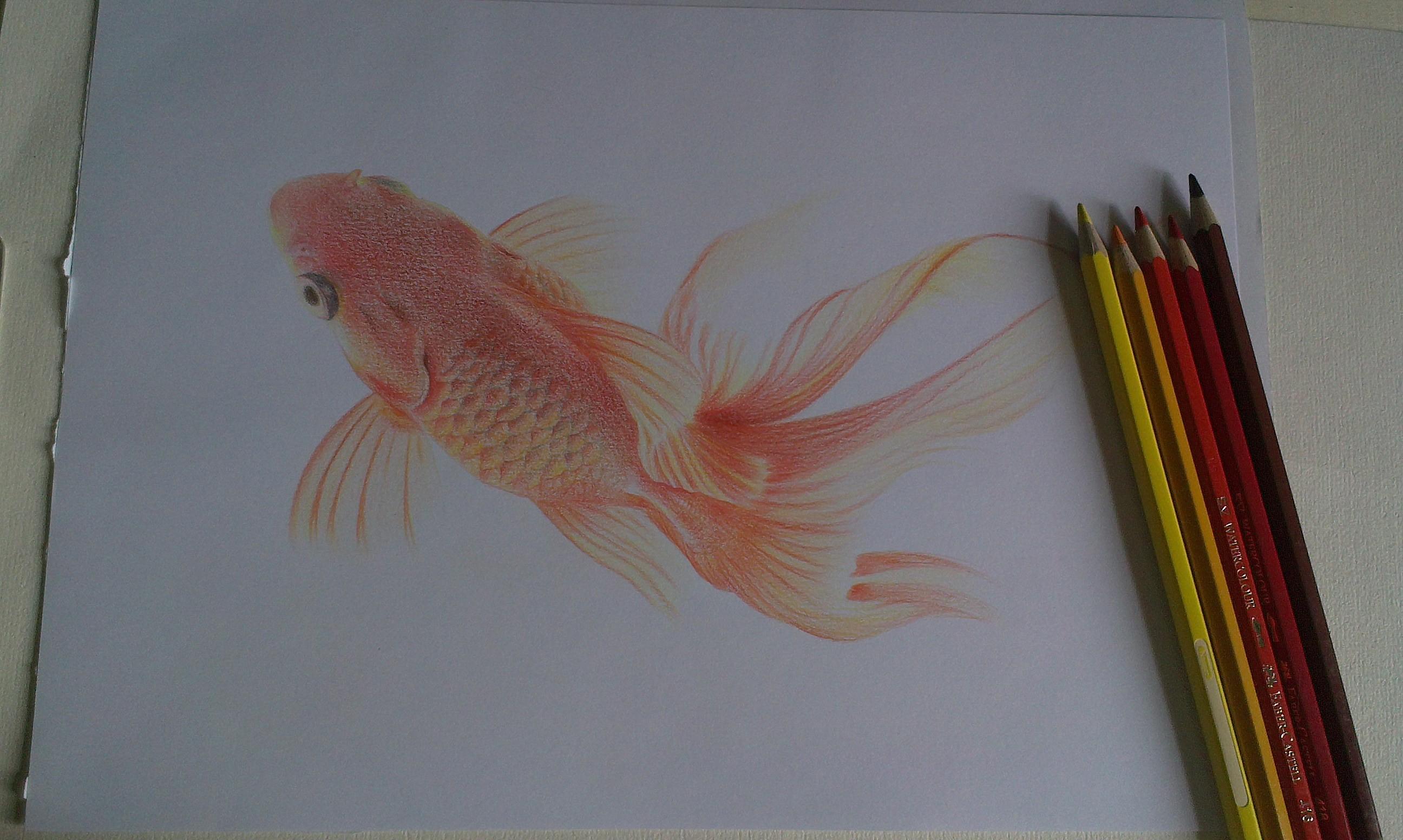 金鱼 彩铅