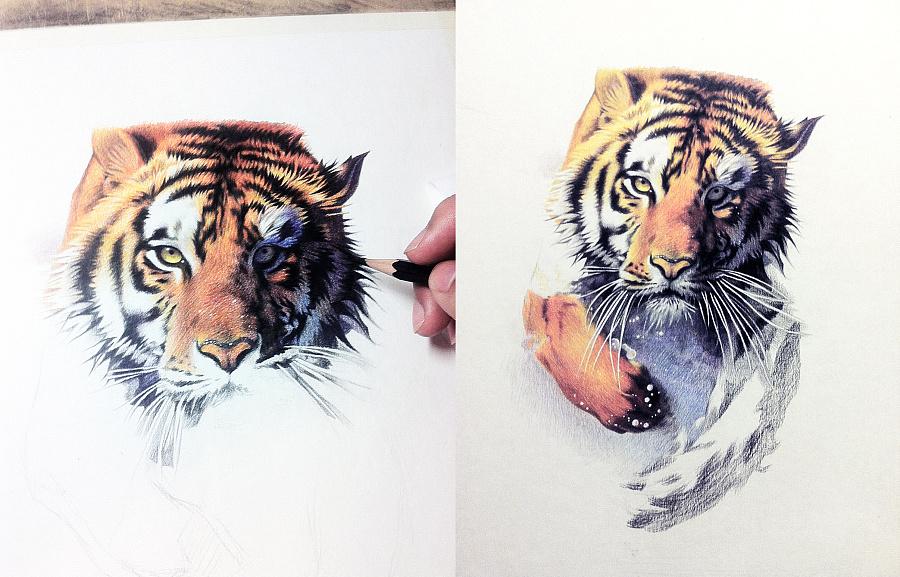 原创作品:彩铅手绘老虎