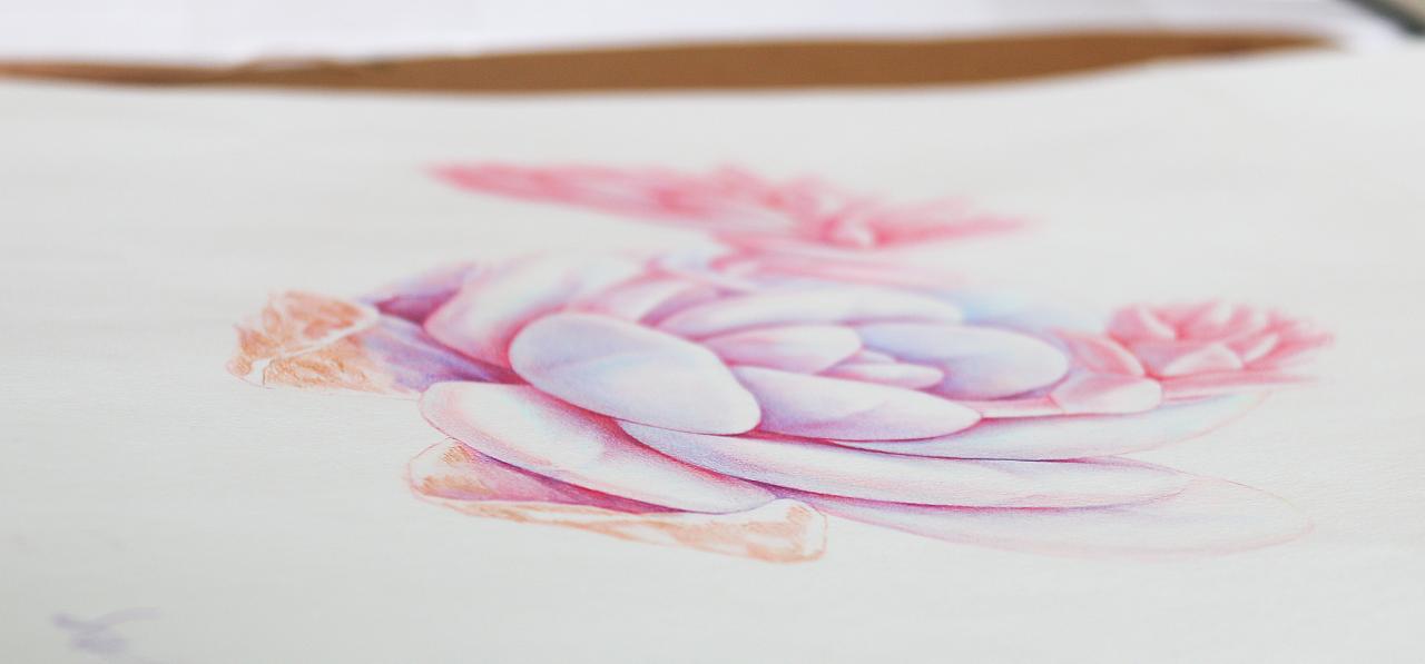 手绘多肉植物——《雪莲》|纯艺术|彩铅|鸩山 - 原创