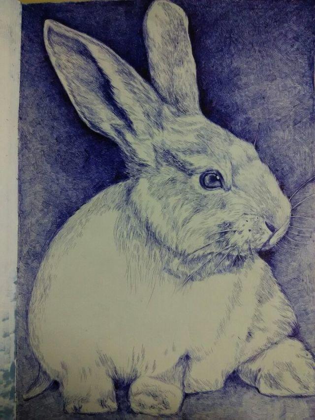 绘画作品动物小兔素描