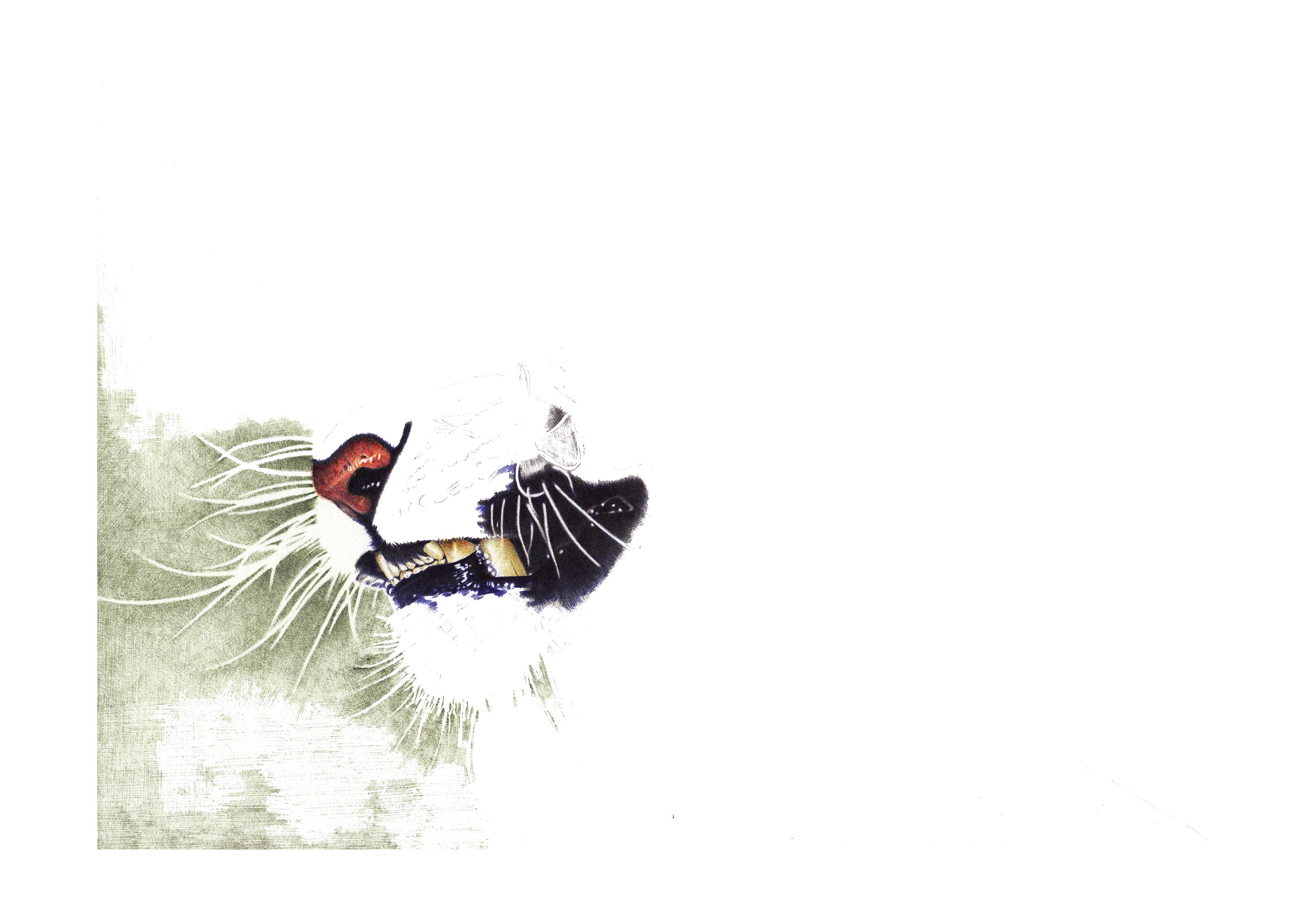 y_lovely 写实 绘老虎步骤纯彩色圆珠笔 狰 2014.12.25 雨天 毕