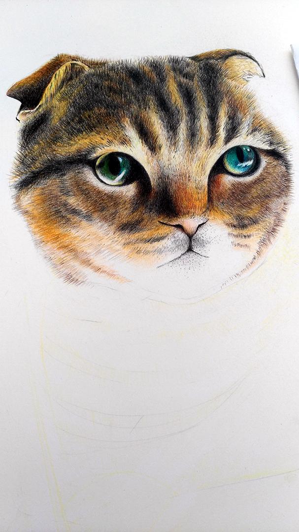 铅笔画画猫咪的图片大全