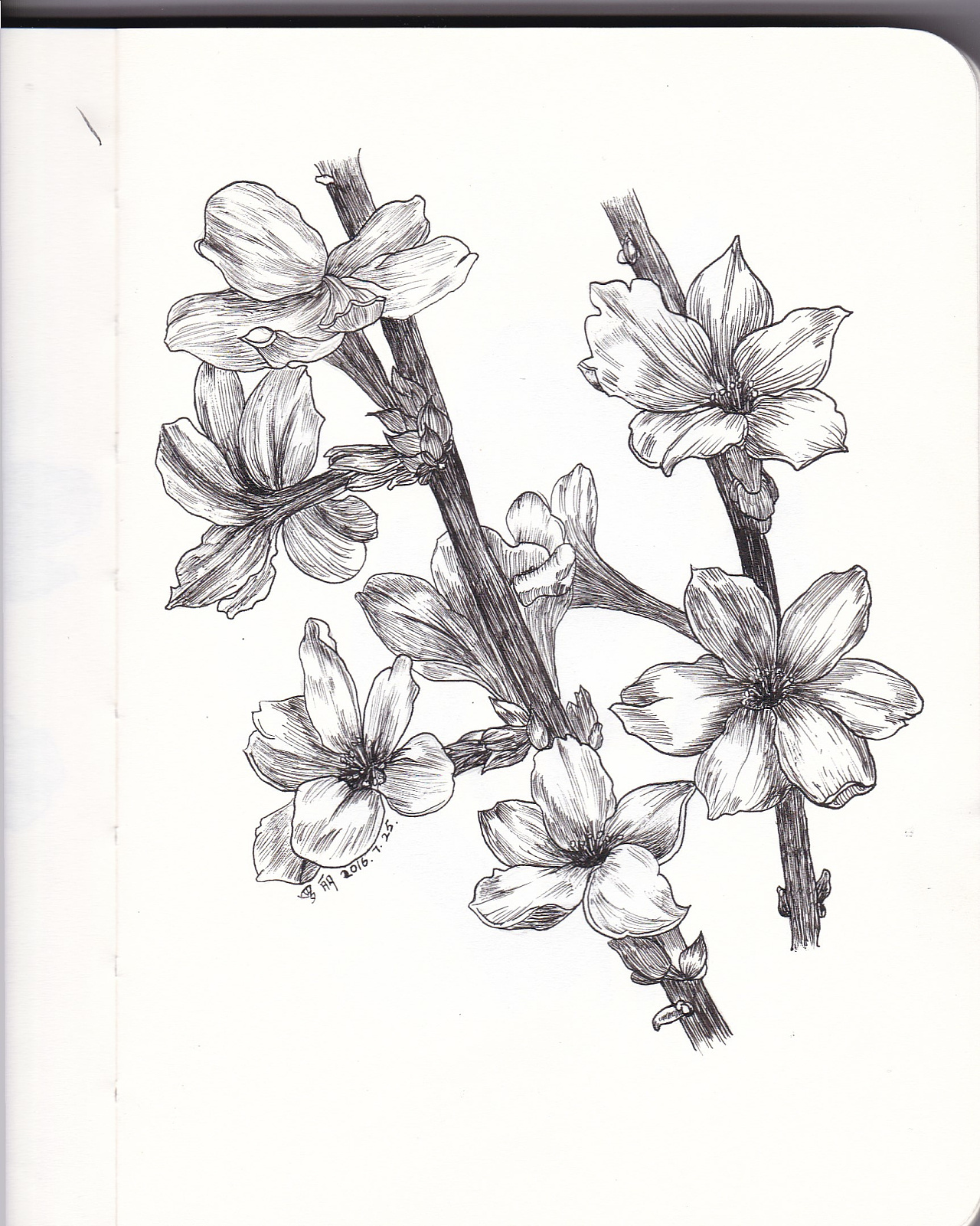 喜欢黑白钢笔画,喜欢线条,因此买书学习,希图片
