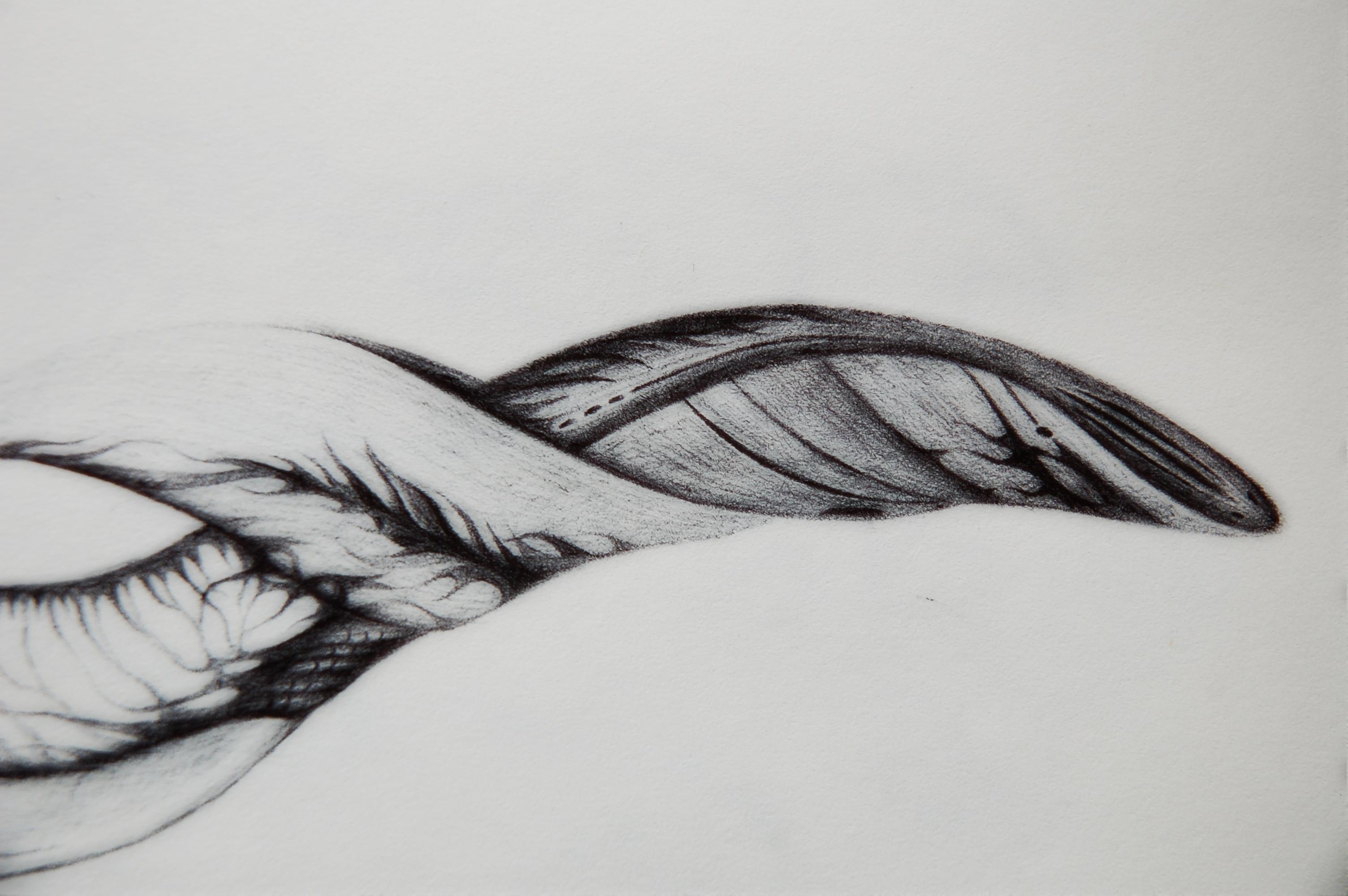 黑圆珠笔手绘(系列1)