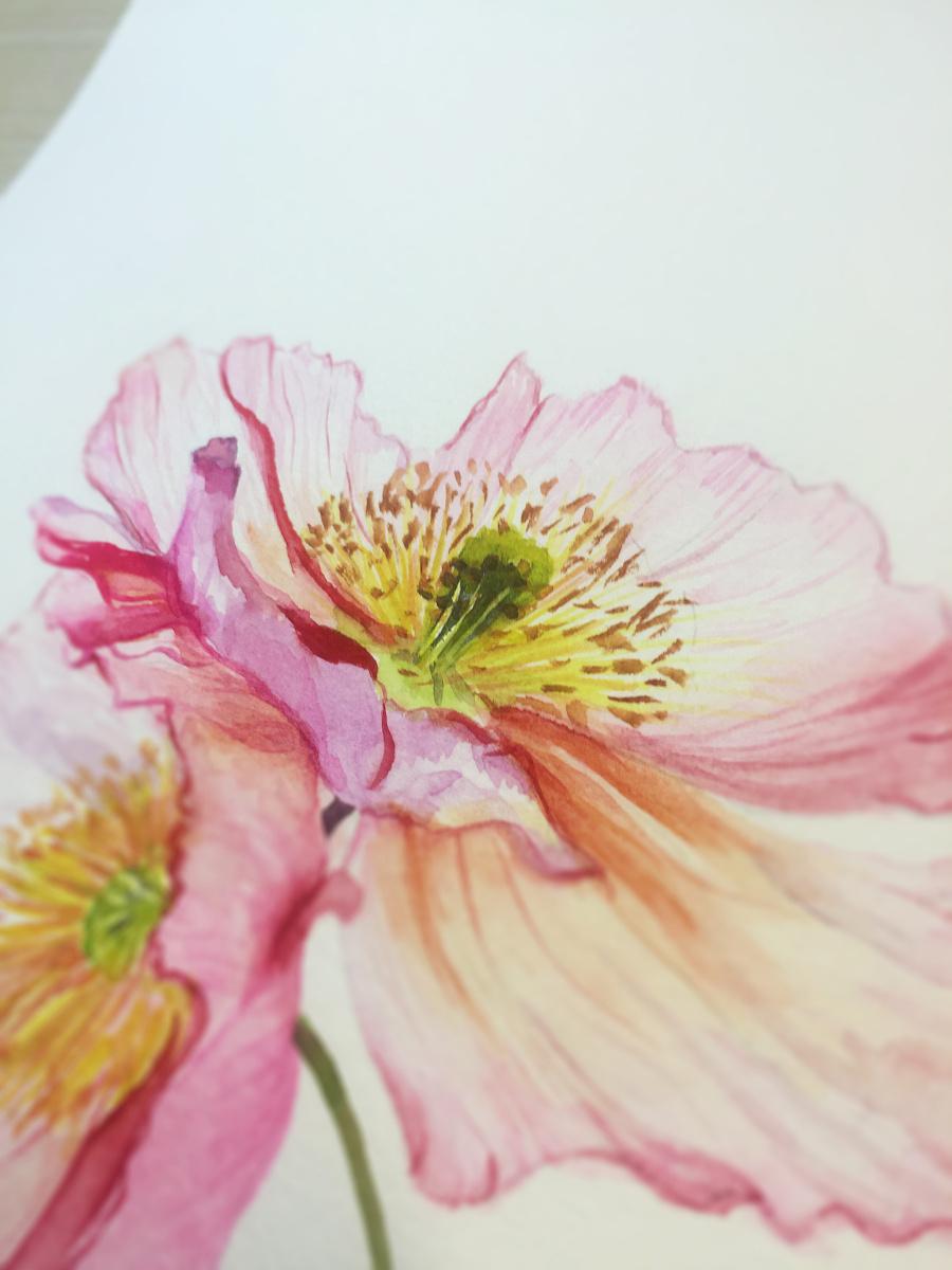 水彩手绘--花卉