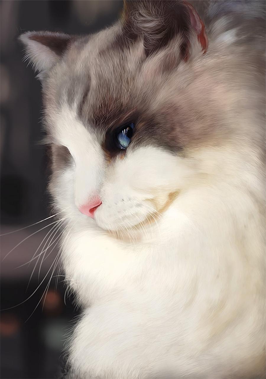 手绘猫电脑桌面
