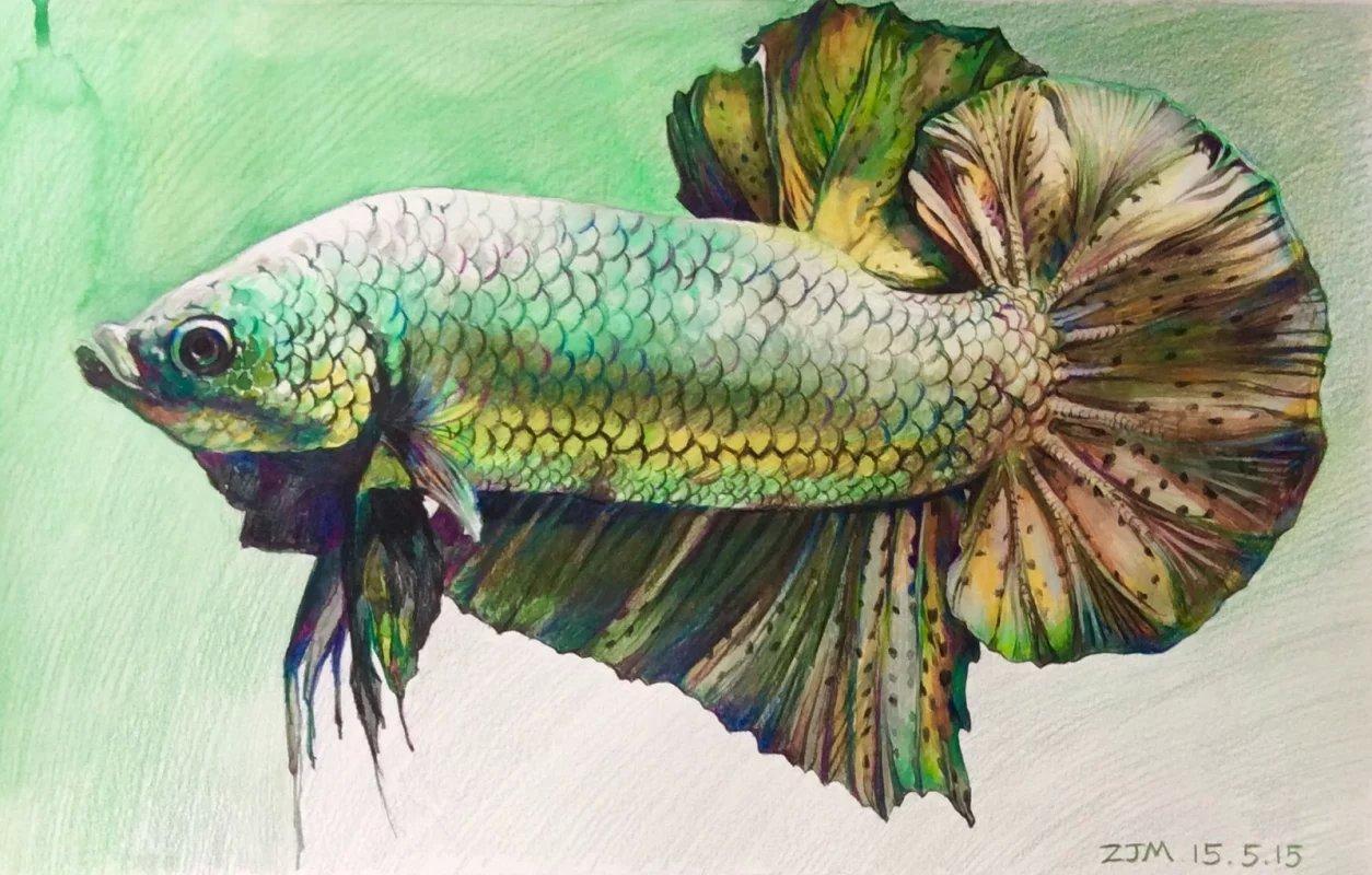 彩铅 鱼 1