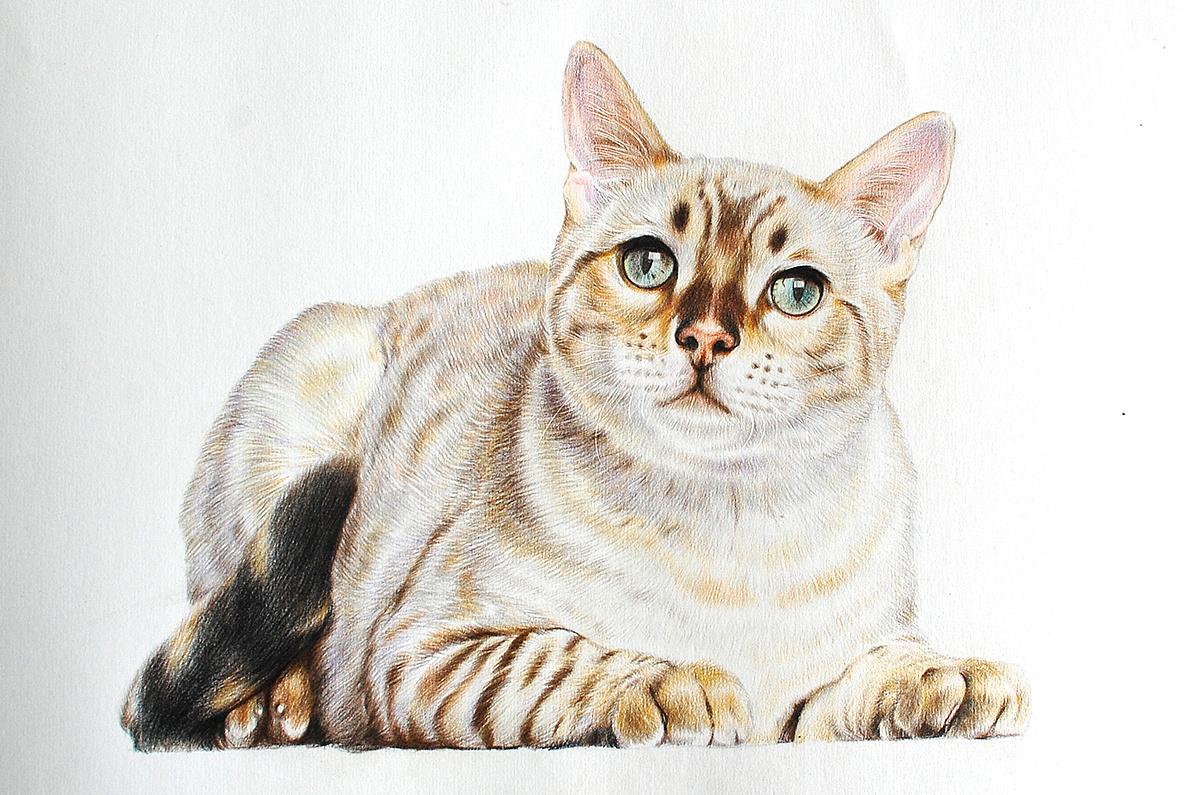 壁纸 动物 猫 猫咪 小猫 桌面 1196_795