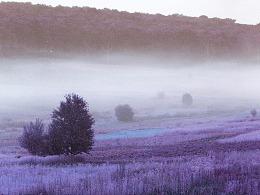 紫色梦幻红外线照片效果