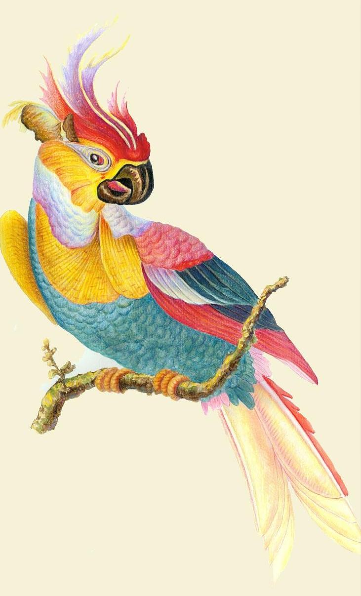 手绘鹦鹉|纯艺术|彩铅|724779629 - 原创作品 - 站酷