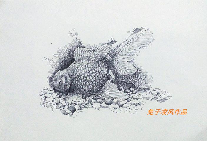 中性笔画练习|纯艺术|钢笔画|兔子凌风 - 原创作品