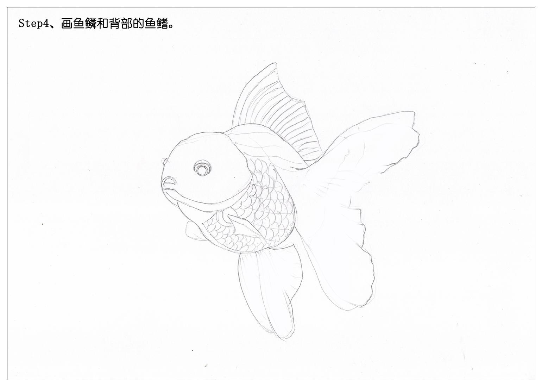 【驴大萌彩铅教程177】手绘金鱼 锦鲤(原创文章)