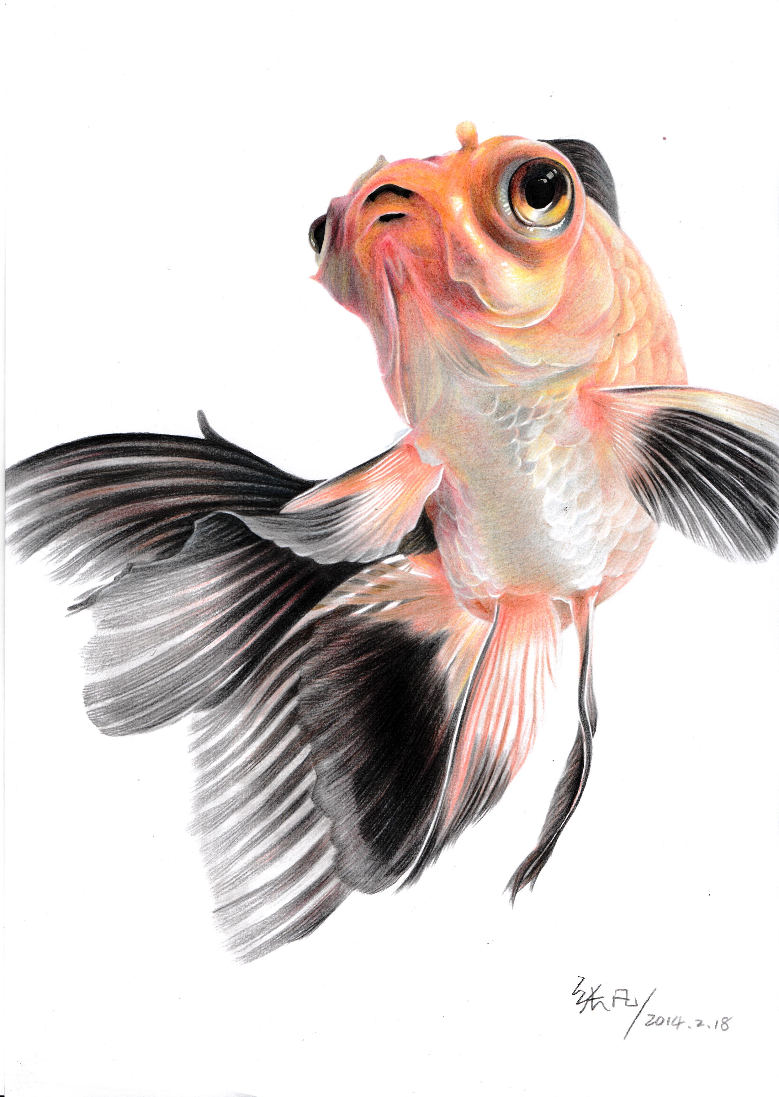 手绘金鱼|纯艺术|彩铅|henry凡 - 原创作品 - 站酷