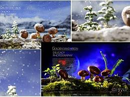 成都美食摄影、电商产品、农副产品香菇拍摄