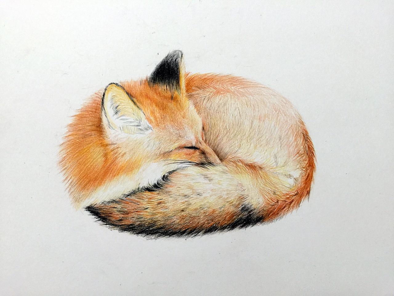 彩铅小狐狸