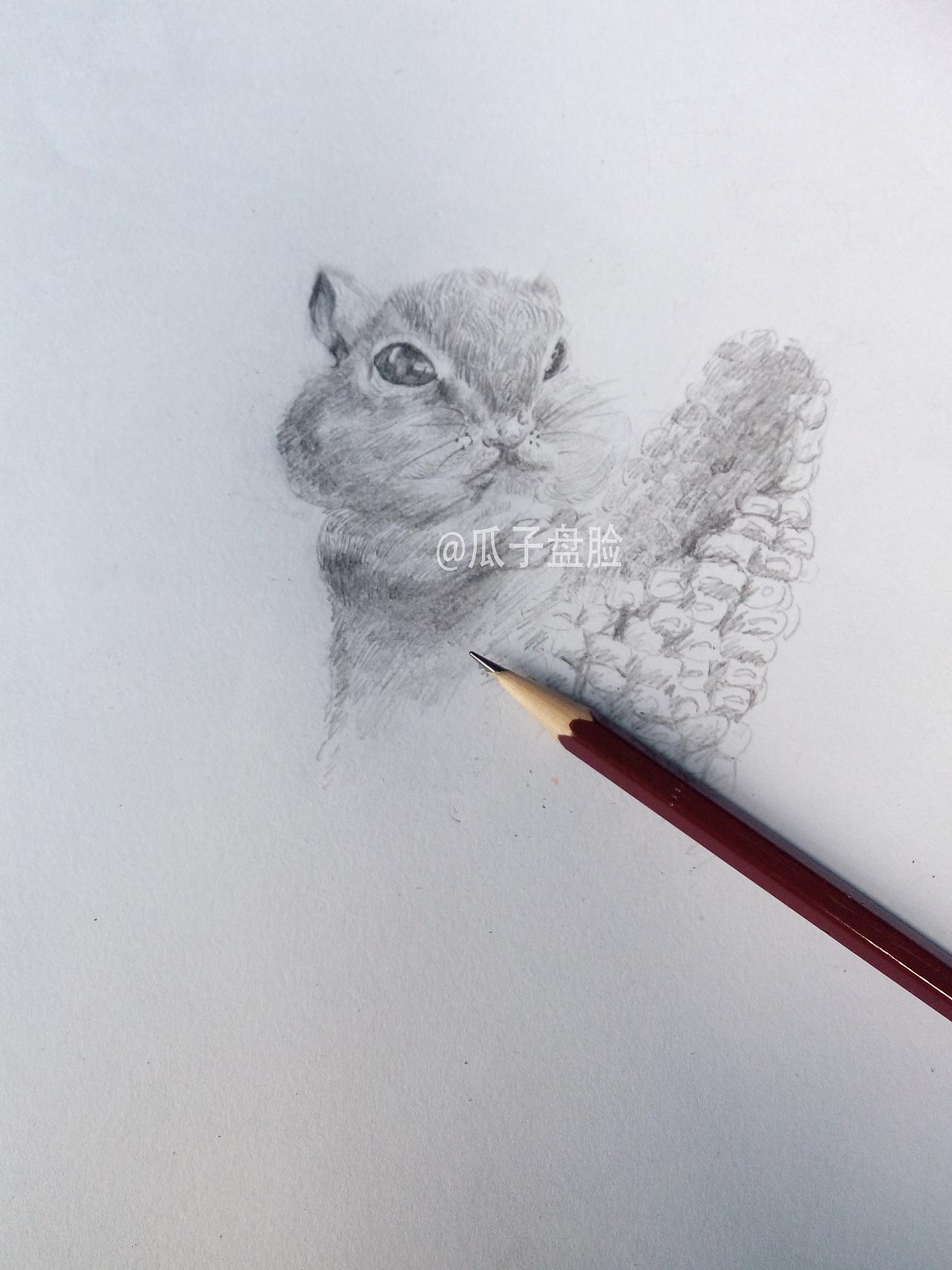 【原创】素描-小松鼠图片