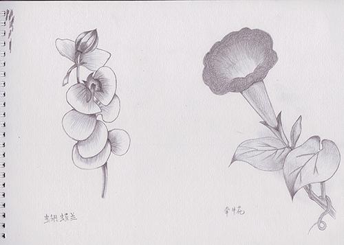 素描 手绘 卡通 花朵