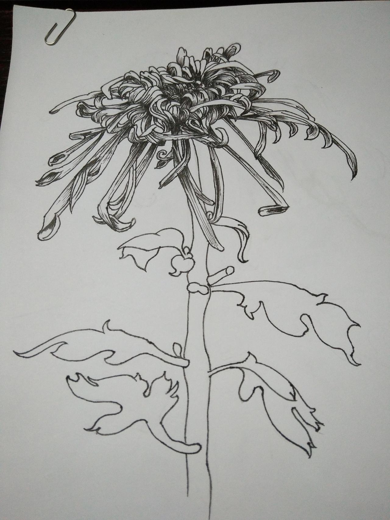手绘菊花教程