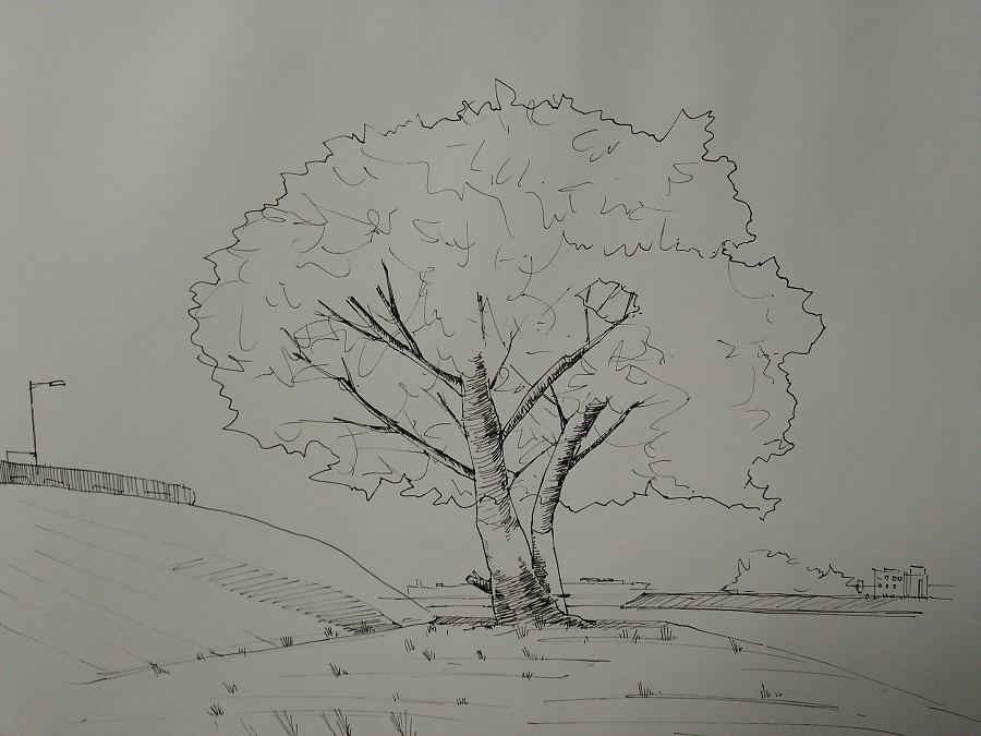 简笔画 手绘 素描 线稿 900_675