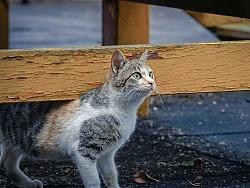 寻猫集10