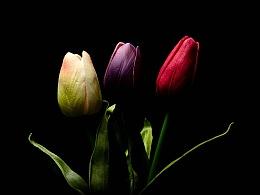 【田石页摄影DEAN】孤独的花