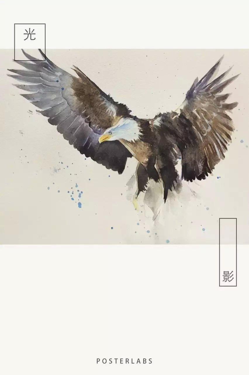 水彩《鹰》