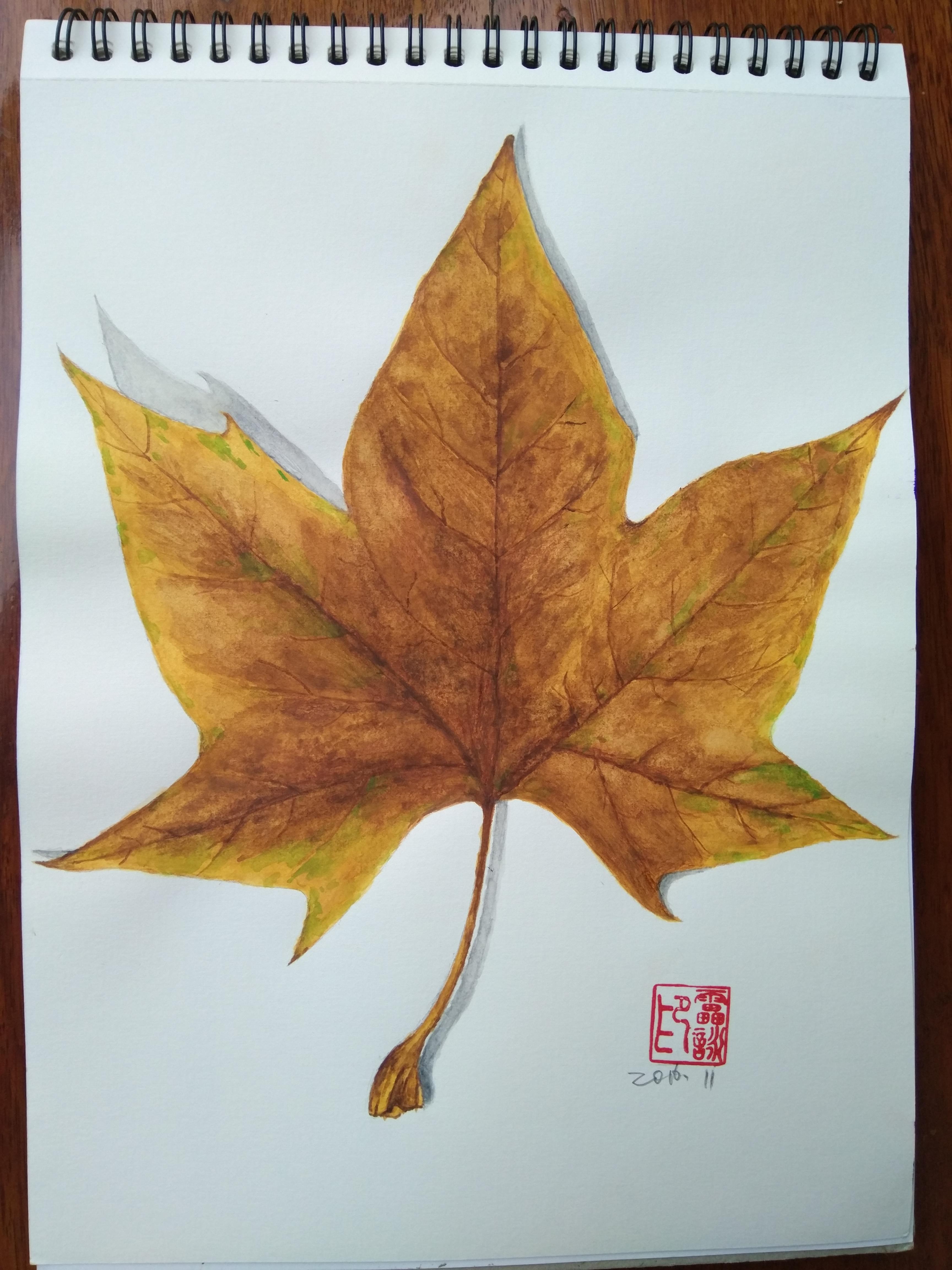 彩铅手绘图片枫叶