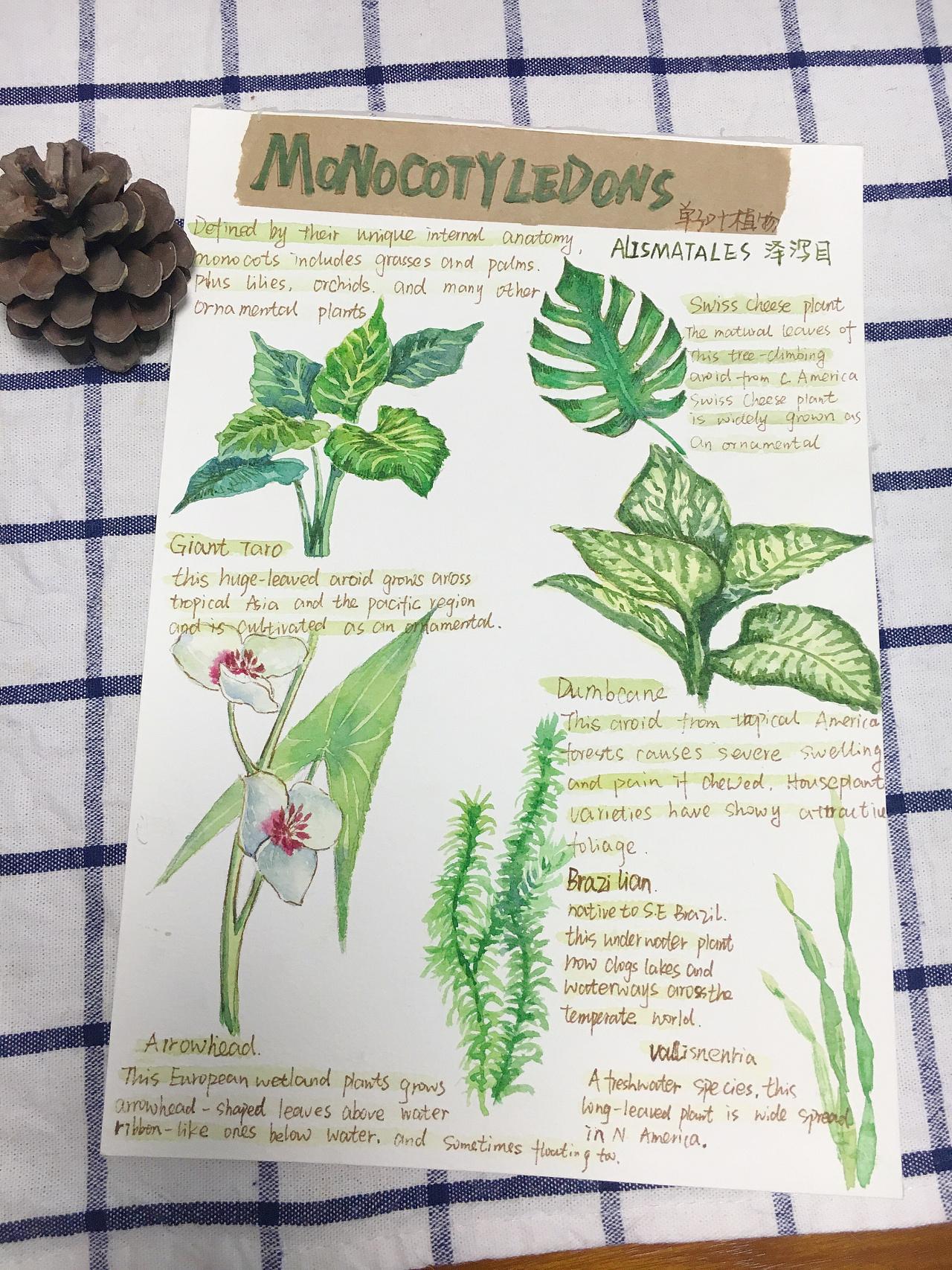 水彩植物手帐