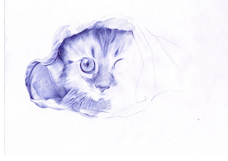 猫咪-圆珠笔画