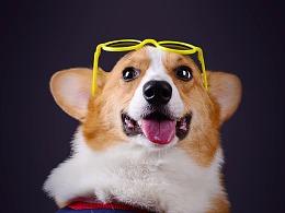 深圳宠物摄影写真-珀珀宠影之客片欣赏