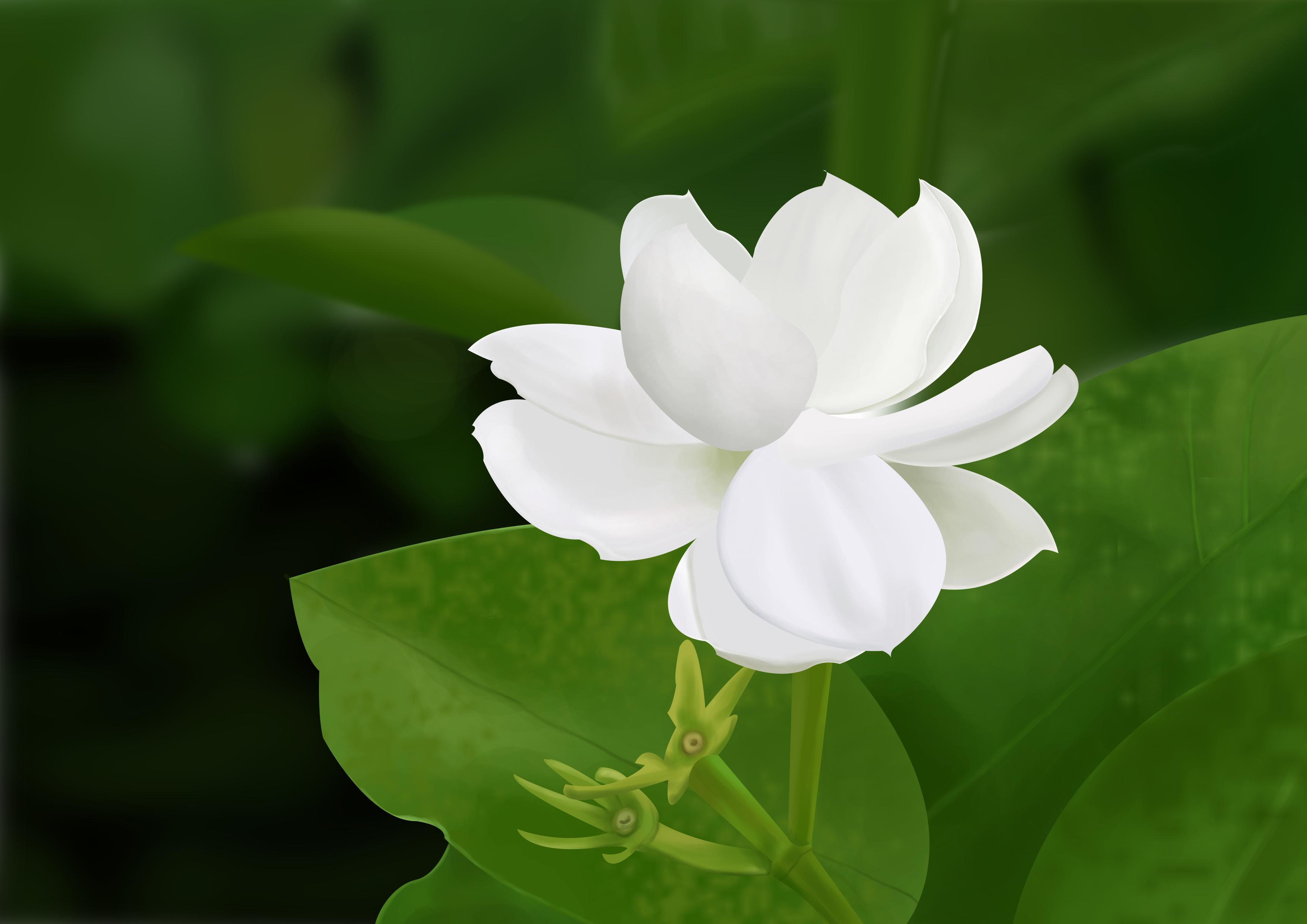 手绘真实白花