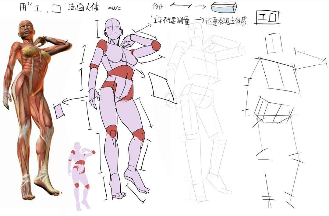 动漫人体结构_原画基础教程丨素描基础教程丨人体结构教程丨漫画教程