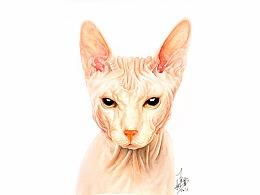 斯芬克斯猫