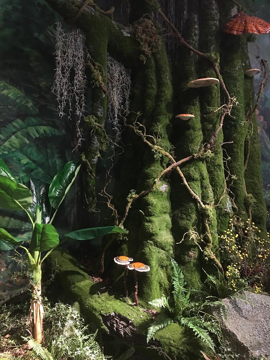 原始森林场景设计|场景|三维|yuquanbing