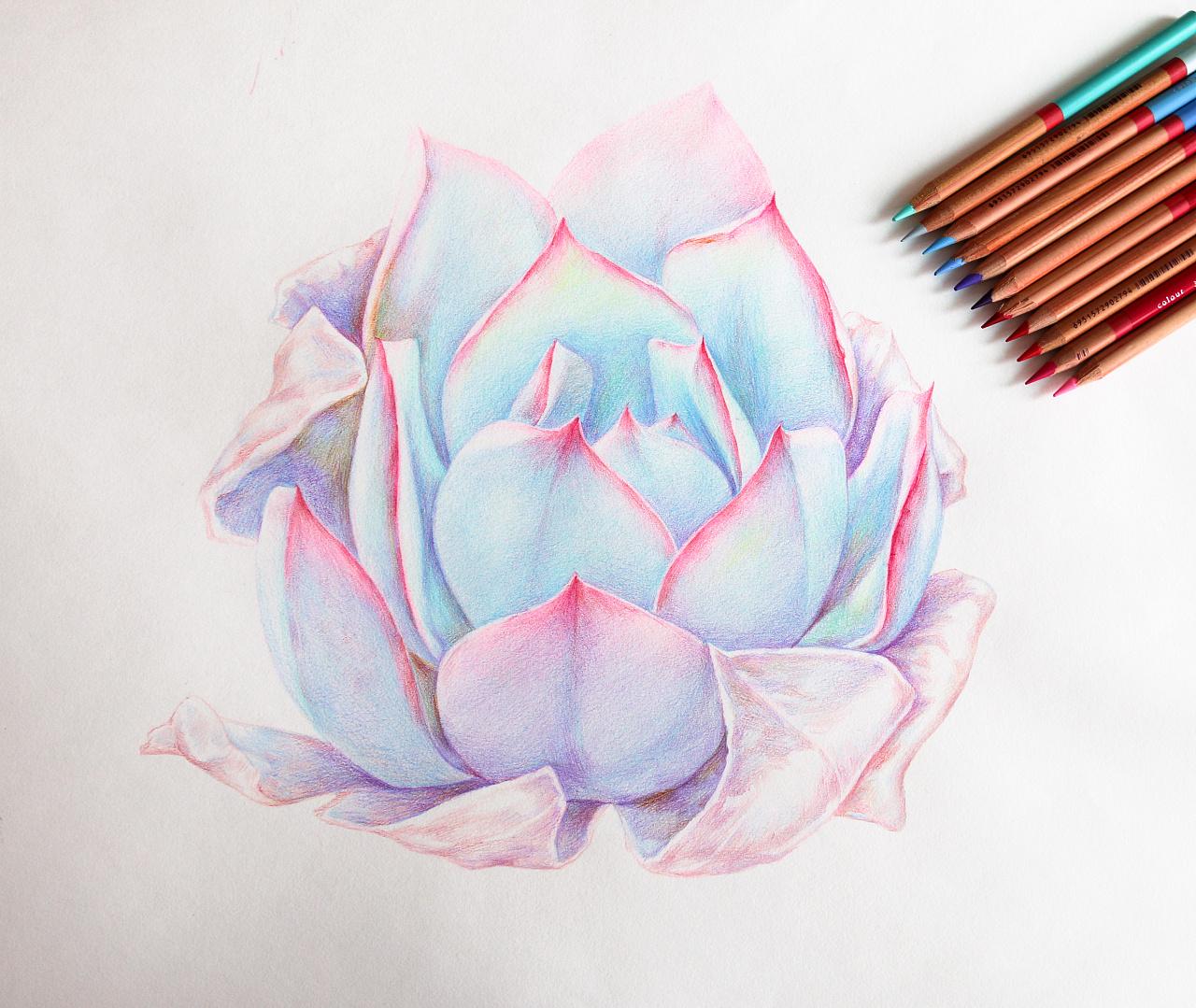 手绘多肉植物——《广寒宫》|纯艺术|彩铅|鸩山