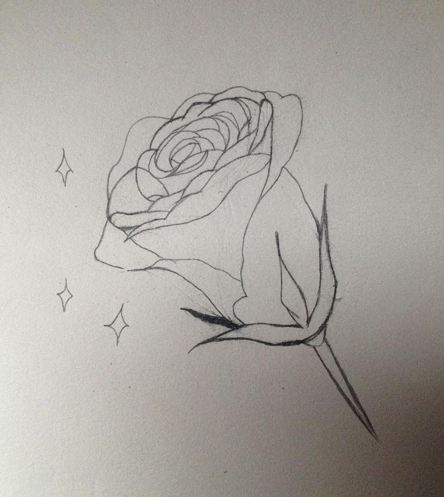春天来了素描一张蔷薇花 站酷 ZCOOL 移动版图片