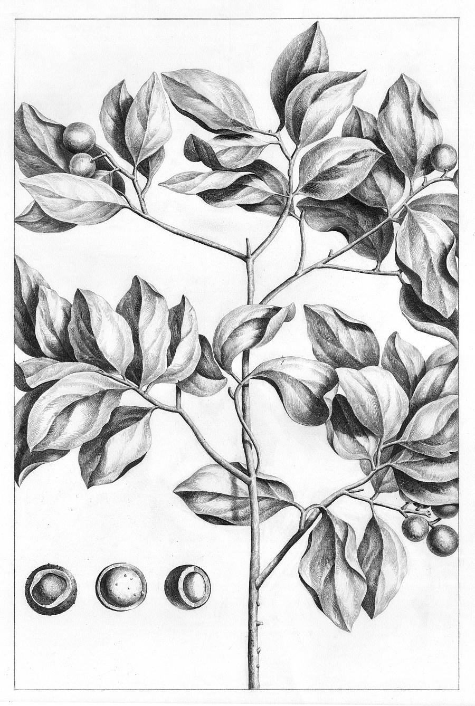 铅笔素描画-超现实动物素描画和古老植物装饰画|商业