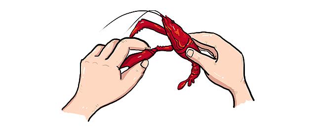 剥虾龙虾快速巧妙的剥小插画情豪烟表土叼的包 商业 插画流程 启图片
