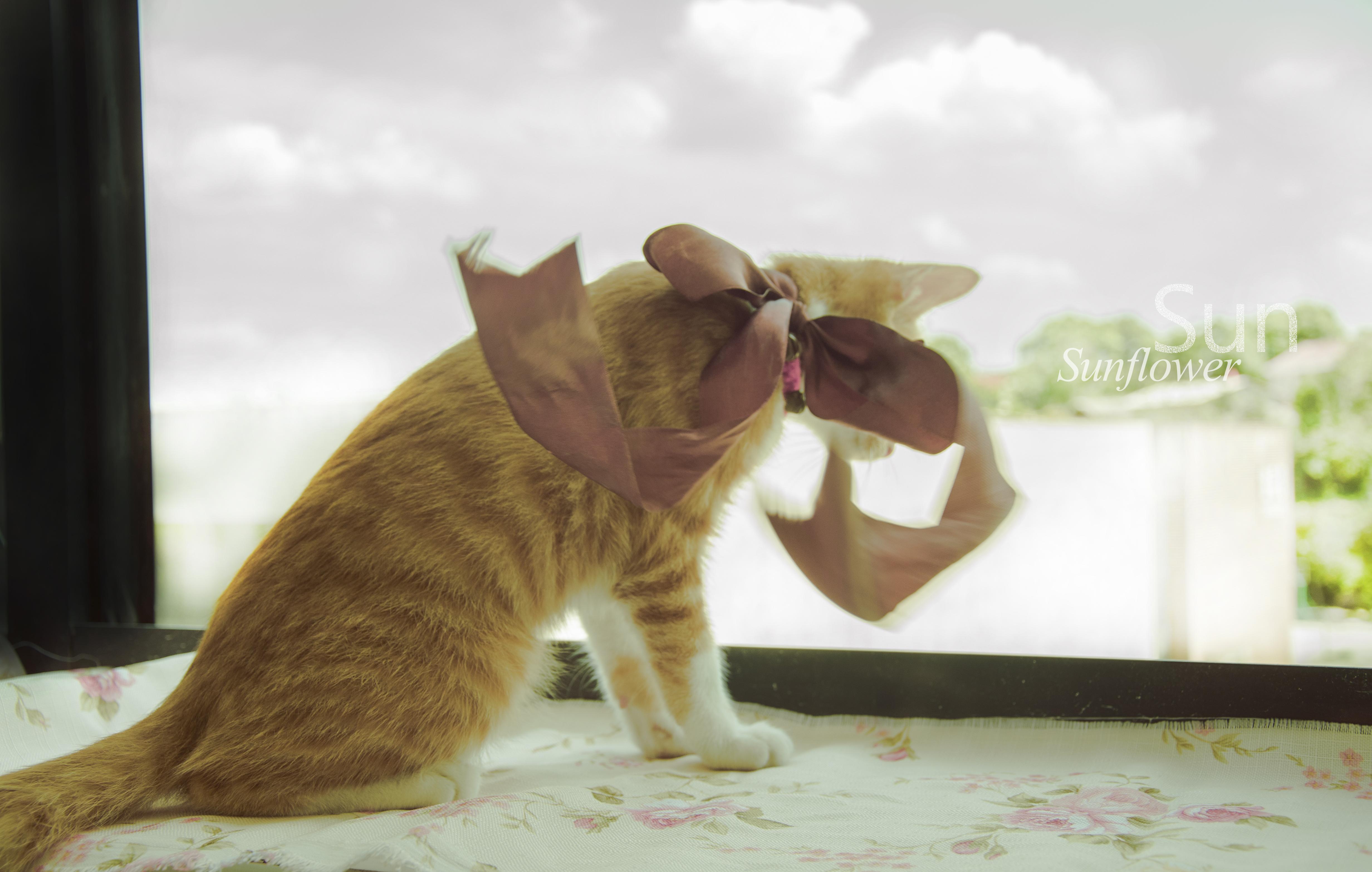 小小班歌谱小猫走走走