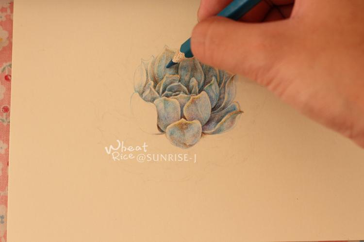 【@SUNRISE-J】彩铅绘制多肉瑜伽|商业教程5植物插画孕月个图片