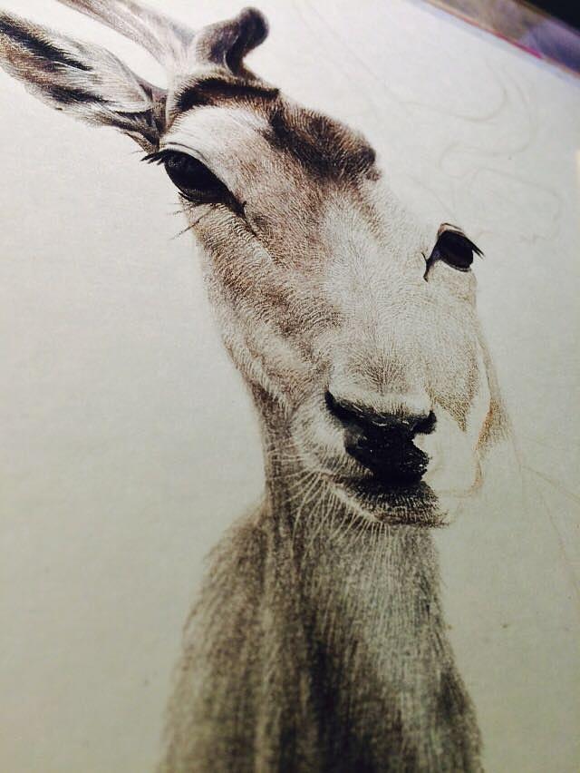 彩铅手绘梅花鹿
