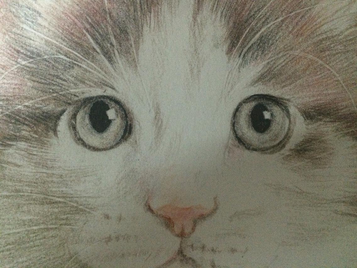 【彩铅】彩铅手绘的猫咪们