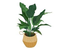 扁平植物插画