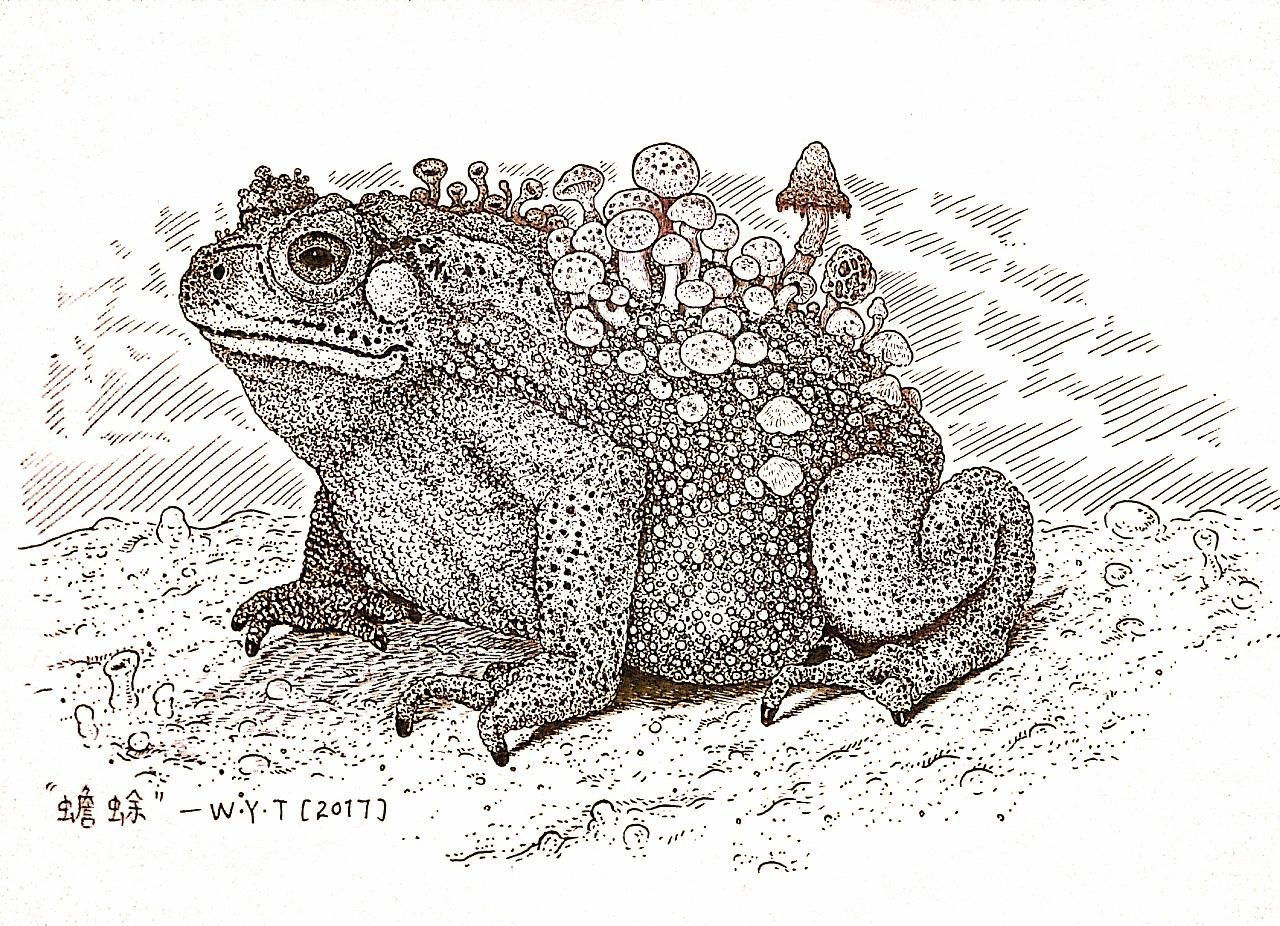 《蟾蜍》:背上长着蘑菇的蟾蜍.