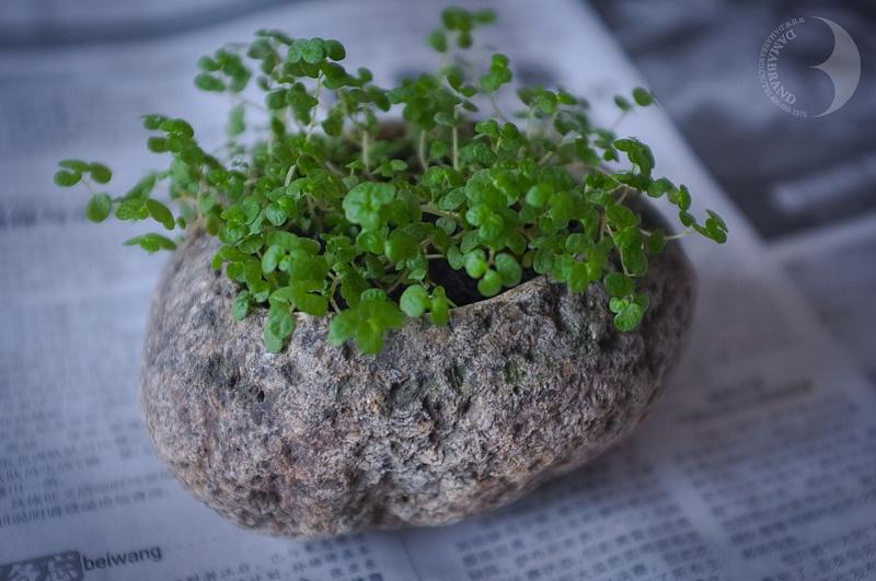 质朴的鹅卵石手工花盆