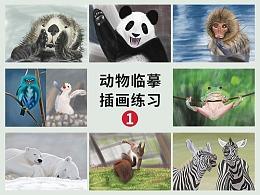 #动物插画#动物临摹插画练习