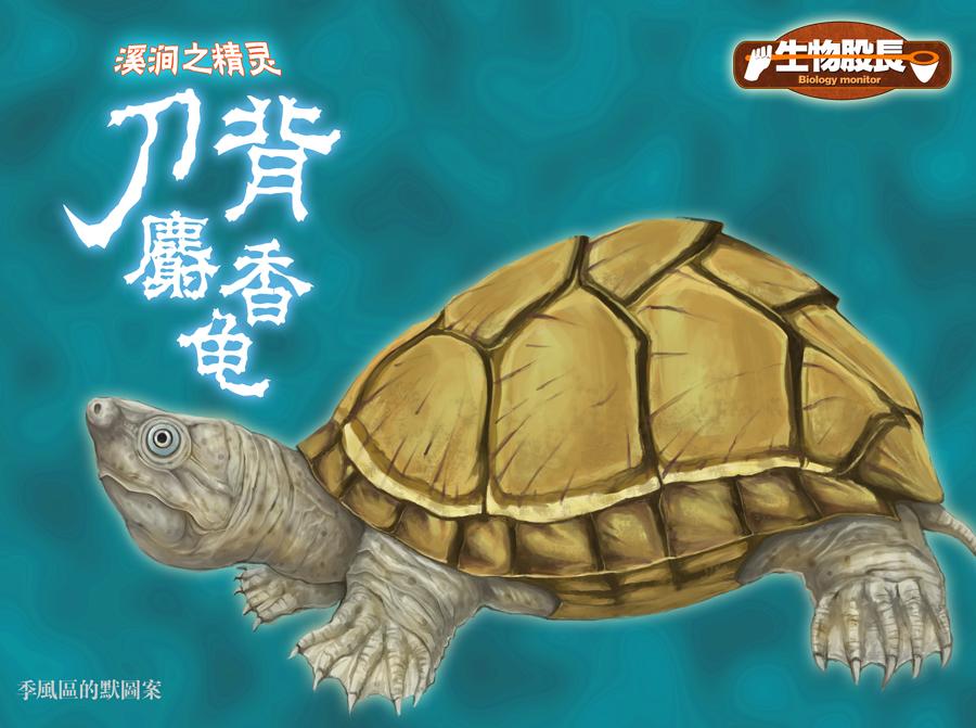 王子麝香之教案生物龟刀背娶了一只青蛙股长图片